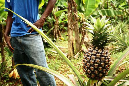 Pineapple Planter photo