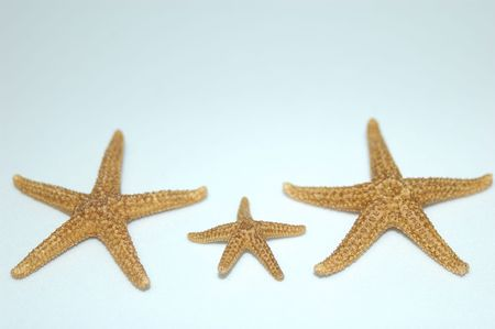 Family of Starfish Stock Photo - 246833