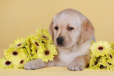 Puppy and flowers photo