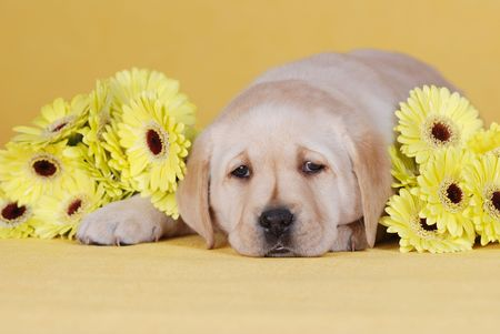 Puupy with yellow flowers photo