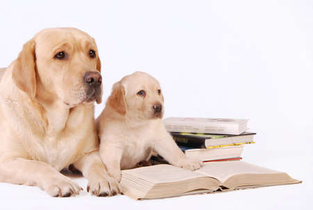 Labrador puppy with his mother and books