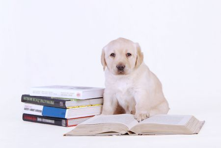 Puppy with books
