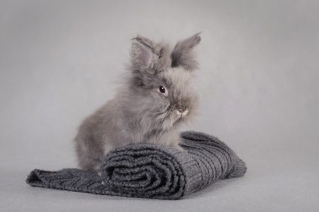 fluffy ears: Rabbit