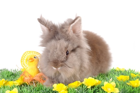 Easter Rabbit photo