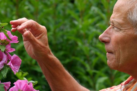 Older man working in the garden Stock Photo