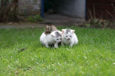 Three little kittens staying close together on the enormous lawn Stock Photo - 380936