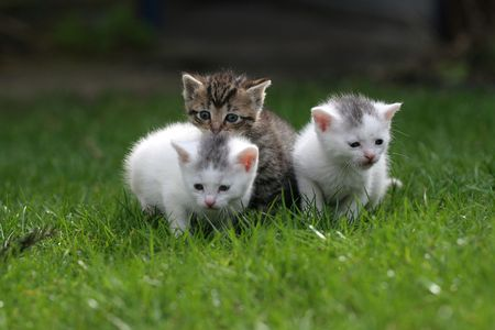 Three litle kittens staying close together on the lawn Stock Photo - 380934