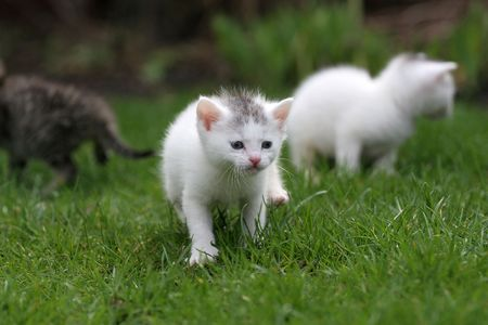 Small kitten out for the first time in the big world Stock Photo - 380928