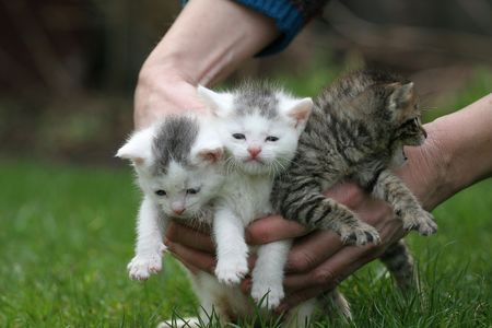 Three cats being put down on the lawn Stock Photo - 380922