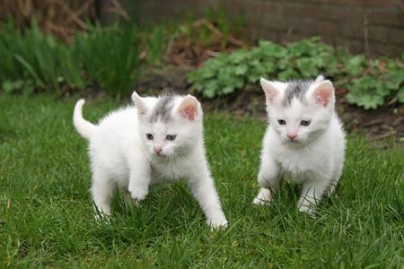 Little kittens looking for trouble Stock Photo