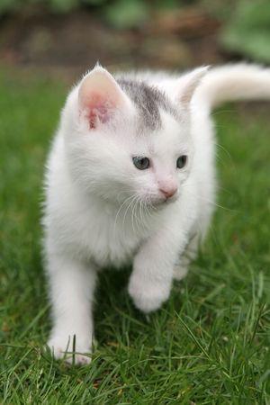 Small kitten walking around in the garden Stock Photo - 388868
