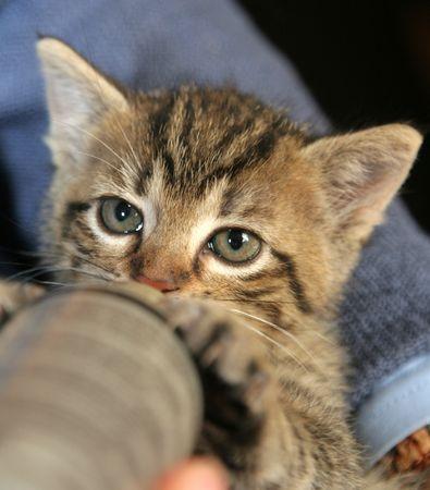 Little kitten drinking from a bottle Stock Photo - 388873