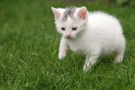 Small young cat walking a bit hesitantly through the garden Stock Photo - 388961