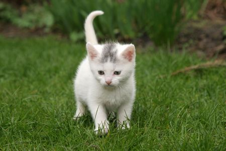 Cute little kitten walking around in the garden Stock Photo - 389022