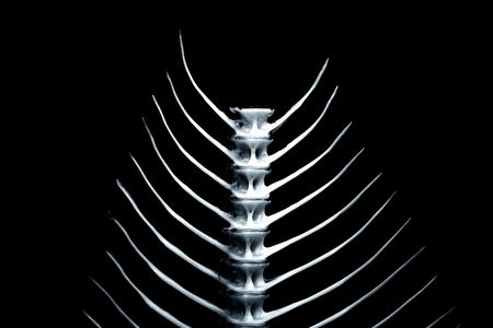 fishbone: Abstract fishbone close-up, white on black Stock Photo