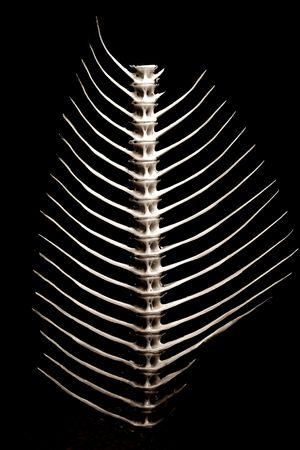 Fishbone close-up, full view, white on black