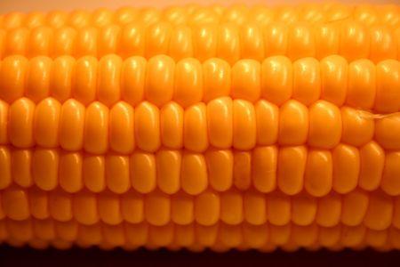 pone: Corn close-up against the black