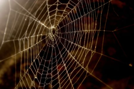 Spider-web close-up Stock Photo