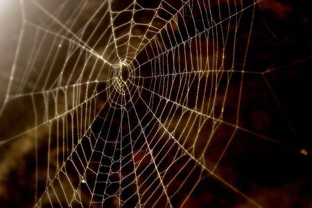 Spider-web close-up Stock Photo