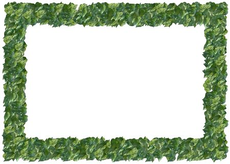 Variegated Philodendron frame. From The Floral Frames series photo