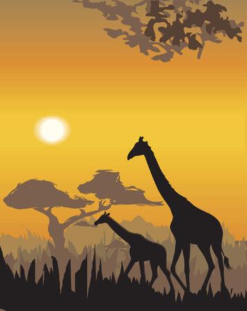 africa sunset: Vector evening landscape illustration with wild animals Illustration