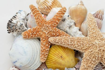 Starfish and shell on white