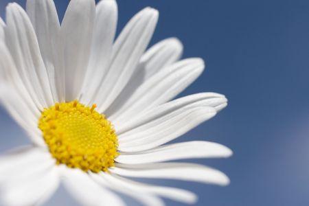 Daisy aigainst blue sky Stock Photo