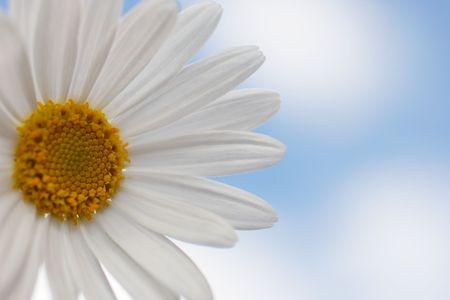 Daisy aigainst blue sky, low contrast