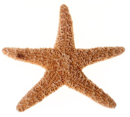 starfish on white background with clipping path