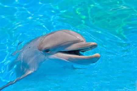 delfin: uśmiechnięte delfinów patrząc z wody