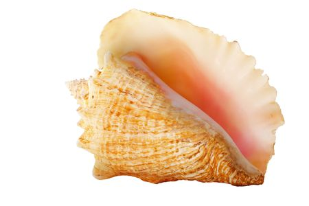 conch shell: Conch shell on white background Stock Photo