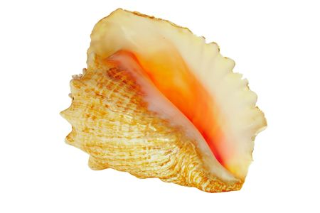 Conch shell on white background Stock Photo