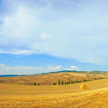 wheat field in italy, tuscany, after harvest Stock Photo