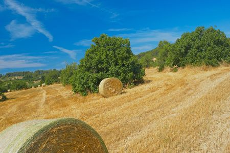 Field with hay bales after harvest