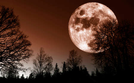 surreal full-moon rising above trees and forest Stock Photo