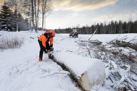 forestry industry: lumberjack cutting trees in snowy winter landscape Stock Photo