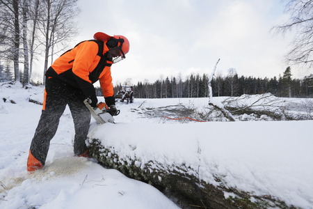 tree works: lumberjack working in snowy landscape cutting wood