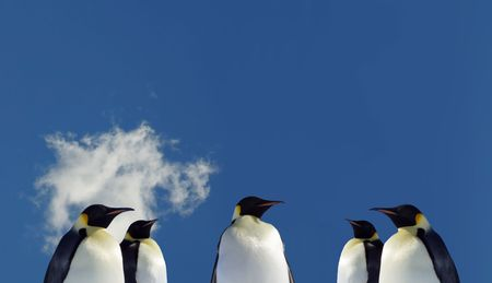 Five Penguins in Antarctia Stock Photo