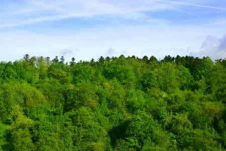Forrest against blue sky