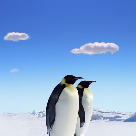 Two penguins at the south pole Stock Photo