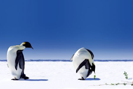 Global Warming in Antarctica - Two penguins looking at plants breaking through the snow Stock Photo