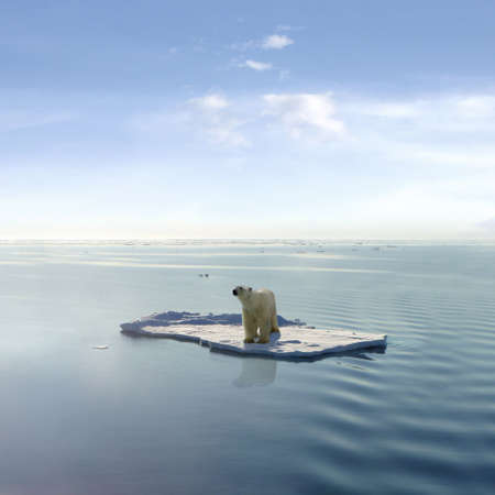 A polar bear managed to get on one of the last ice floes floating in the Arctic sea. Stock Photo