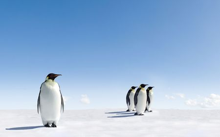 Emperor Penguins in Antarctica Stock Photo - 3852385