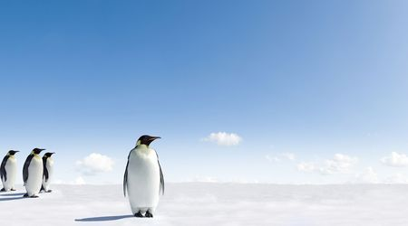 Emperor Penguins in Antarctica Stock Photo - 3852386