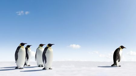 Emperor Penguin rejected by other Penguins photo