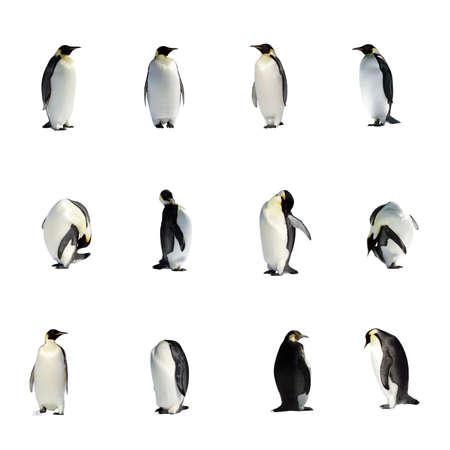 pinguins: Une collection de pingouins isol�s