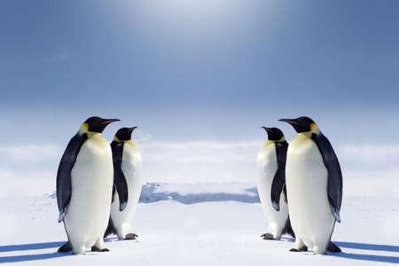 pinguins: Deux paires de pingouins face � face au p�le Sud.  Banque d'images