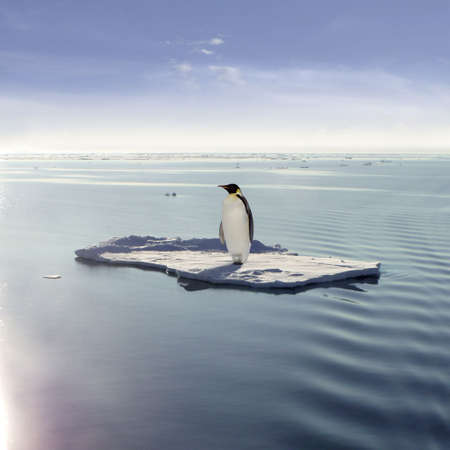 Emperor Penguin on a floating ice floe Stock Photo