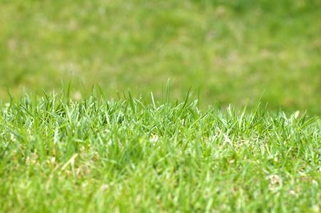 Nature, Park, Green Grass makro Stock Photo - 900680