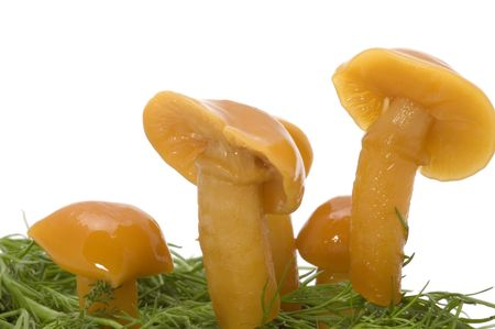 poisoned: series object on white - food - yellow mushrooms Stock Photo